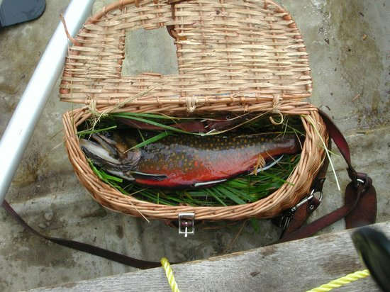 Crooked Lake Resort: Fall brook trout