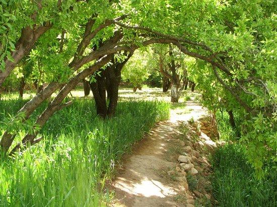 Kasbah Ounila: les jardins
