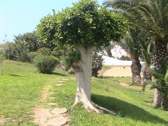 Kenzi Europa : The backyard