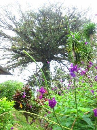 Ceiba Tree Lodge: Ceiba Tree