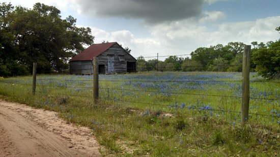 BlissWood Bed and Breakfast Ranch: Bluebonnets everywhere around the ranch
