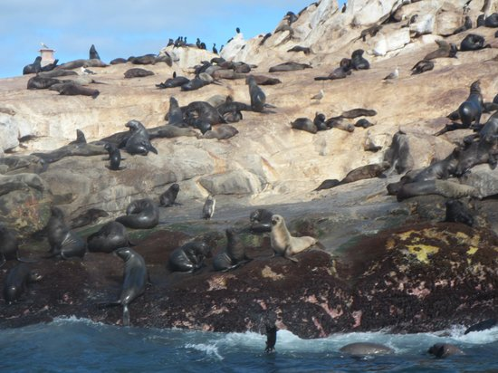 Apex Shark Expeditions : Seal Island