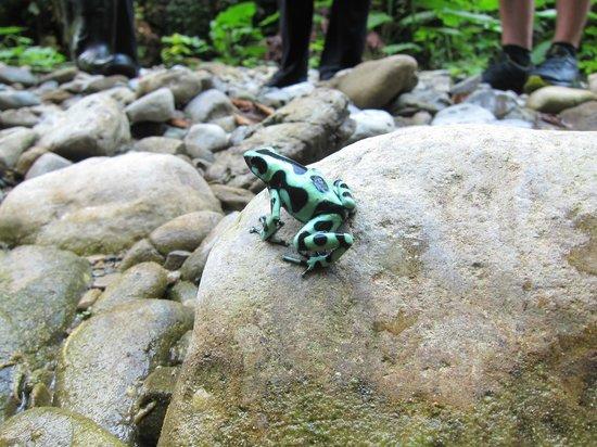 Selva Bananito Lodge: Tierwelt