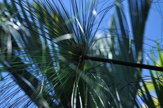 Rochers Caraibes-Eco Village : jardin