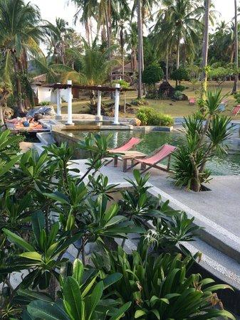 The Jungle Club Restaurant : la piscine