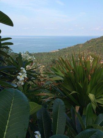 The Jungle Club Restaurant : une des vues
