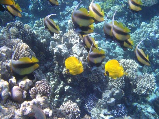 Jaz Fanara Resort & Residence: it is like swimming in a marine fish tank