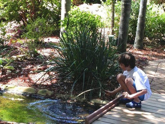 Park Shore Resort: A stream, a boy, and a stick...
