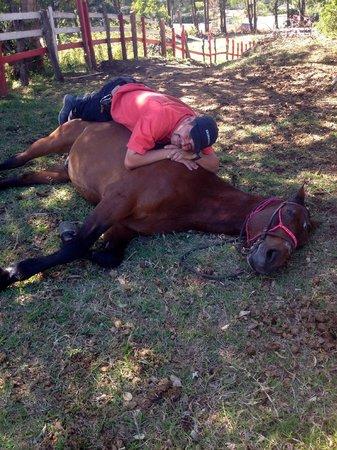 Horse Trek Monteverde - Horseback Riding in Costa Rica : Marvin and Gladiator