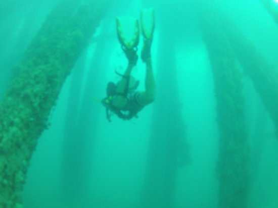 Black Beard Sports: Diving under the pier