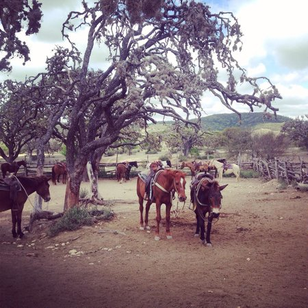 Dixie Dude Ranch: Horses