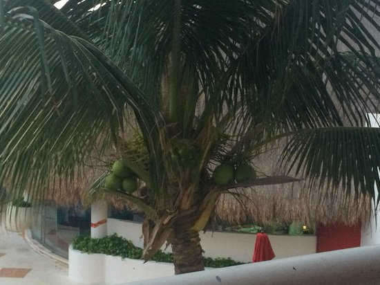 Temptation Resort Spa Cancun: View from room 1254