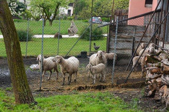 B&B Al Sole di Cavessago : le pecore