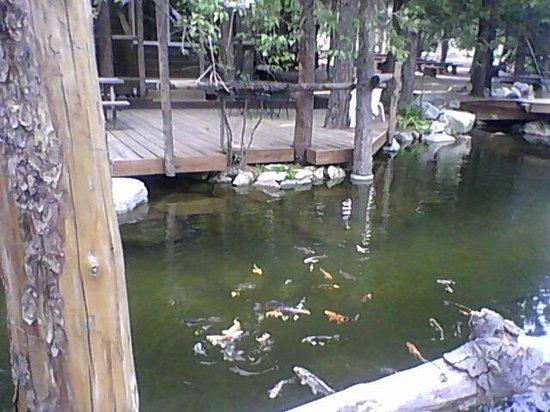 Arrowhead Pine Rose Cabins : fish!