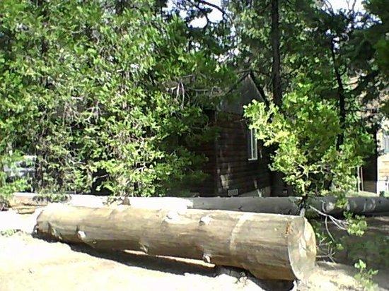 Arrowhead Pine Rose Cabins: Cabin 10
