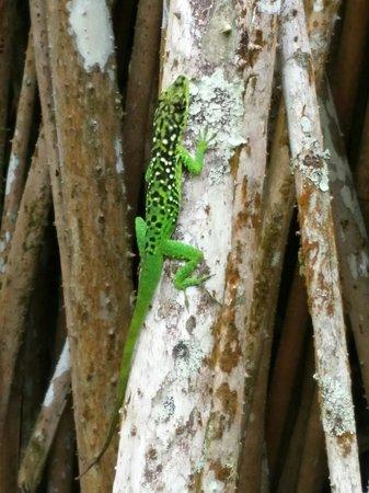 Jardin de Balata : Une lézard sur un arbre