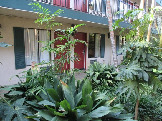Quality Inn & Suites - Anaheim Resort: Lots of greenery between suite buildings!