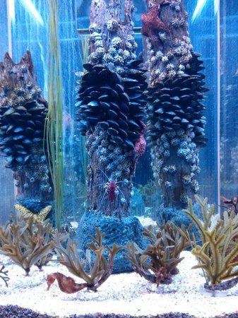 Aquarium du Quebec : crevettes et hypocampe