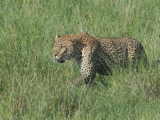 Basecamp Masai Mara : Masai Mara