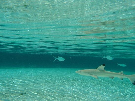 Constance Moofushi: Baby sharks!