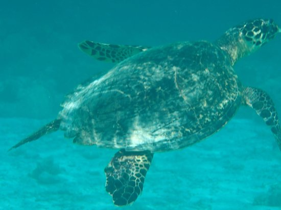 Constance Moofushi: Our friend the turtle