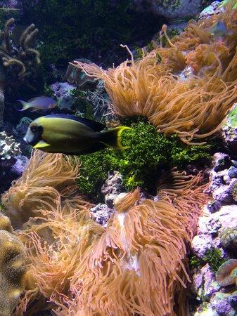 Shedd Aquarium V