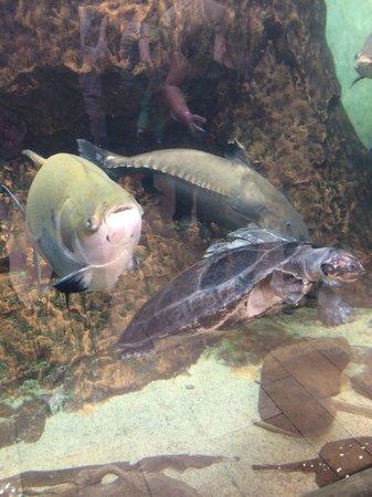 Shedd Aquarium III