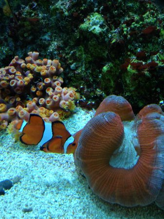 Shedd Aquarium I