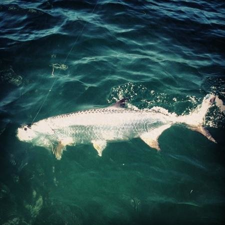 Angling Adventures with Captain Rich Smith: Tarpon fishing in the florida keys