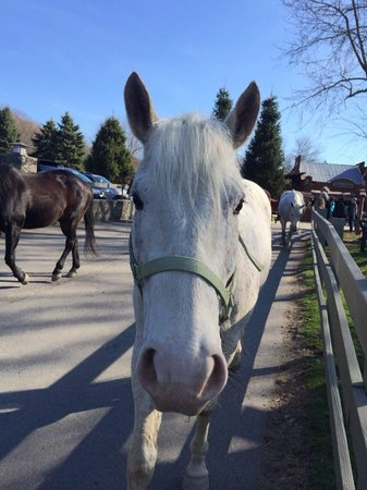 Rocking Horse Ranch Resort: Beautiful horses