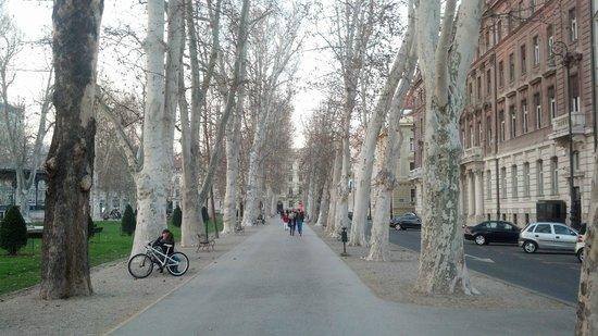 Zrinjevac: Trees...
