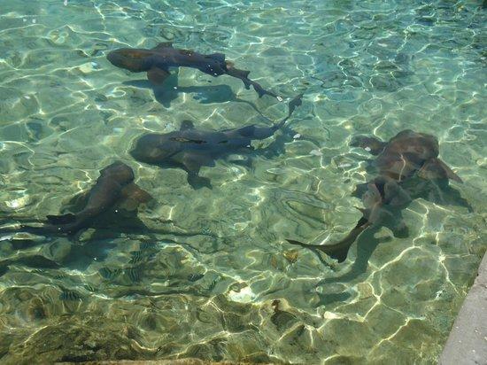 Fowl Cay Resort: Staniel Cay Yacht Club