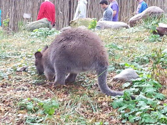 Blank Park Zoo : Hopping good time