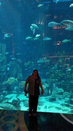 Atlantis, The Palm : aquário