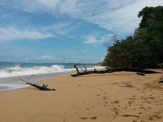 Playa Bluff: Great beach, great waves!
