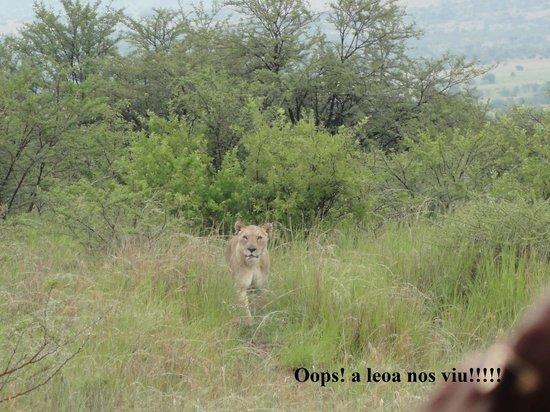 Bakubung Bush Lodge : Eba, vimos leões.