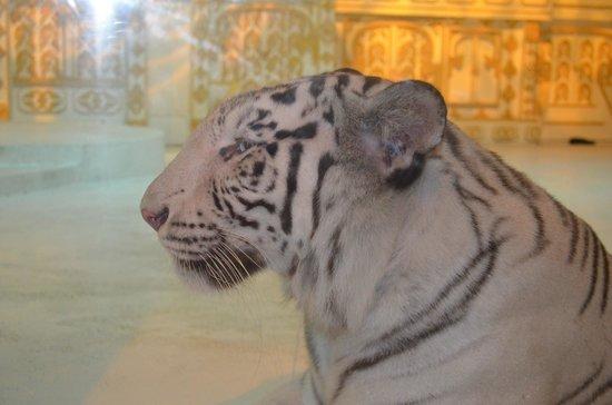 Phuket FantaSea : White Tiger