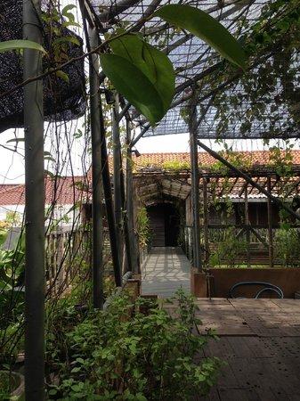 Rumah Turi: Jalan dari taman menuju hotel
