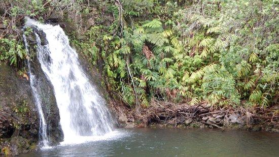 Kohala Waterfalls Adventure: Waterfall #1