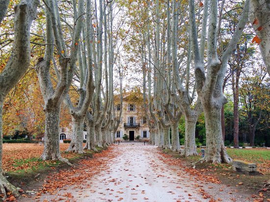 Le Chateau des Alpilles : Driving up to the Chateau