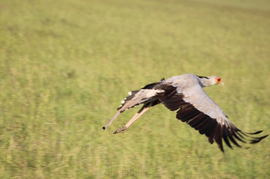Mara Leisure Camp : In flight
