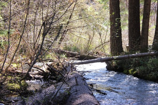 Union Creek Resort: Creek