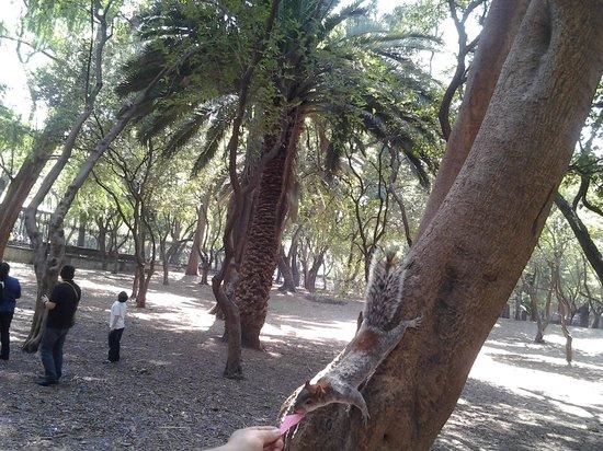 Parc de Chapultepec : Не забудьте побаловать белочек орешками или прочими вкусняшками