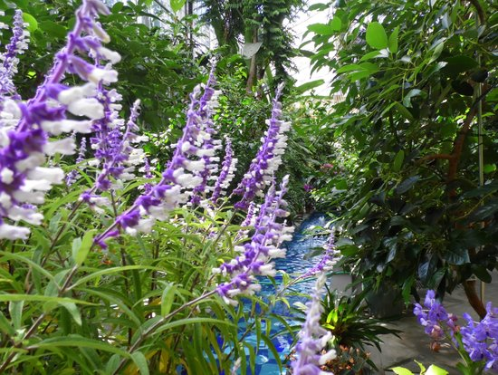 United States Botanic Garden: Flores