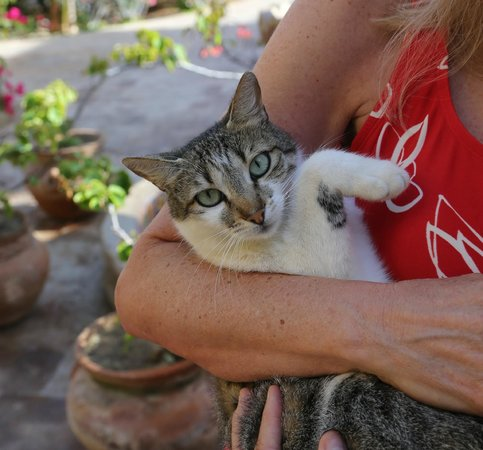 Hacienda Cerritos Boutique Hotel: One of the cats