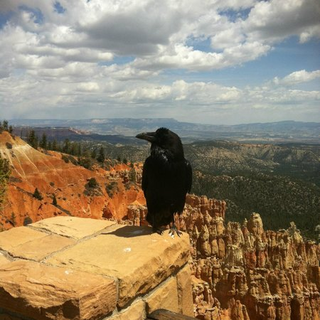 Bryce Canyon National Park: De Raven