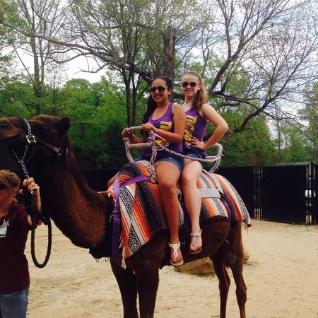Memphis Zoo: The camel rides were a nice surprise. At only $5.00, it was worth it.