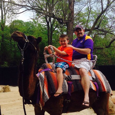 Memphis Zoo: My son loved the camel ride.
