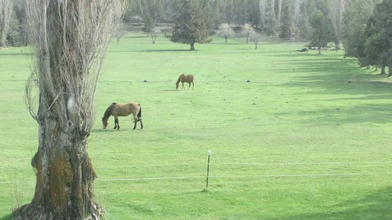 Long Hollow Guest Ranch : View from the upstairs room