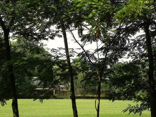 Sinclairs Retreat Dooars, Chalsa: Green lawns